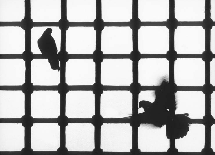 1965-Güvercinler-Yeni-Cami-İstanbul